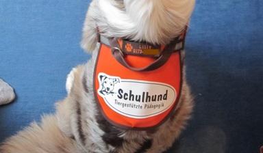 Logo-Sattel Schulhund.jpg